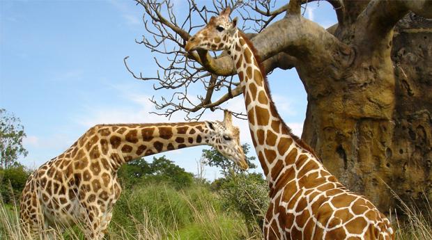 Badoca Safari Parque! 2 Noites para 2 Adultos e 1 Criança no Refúgio das Origens!